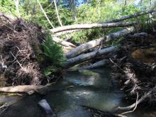 Hardwood LWD installed for the Butano Floodplain