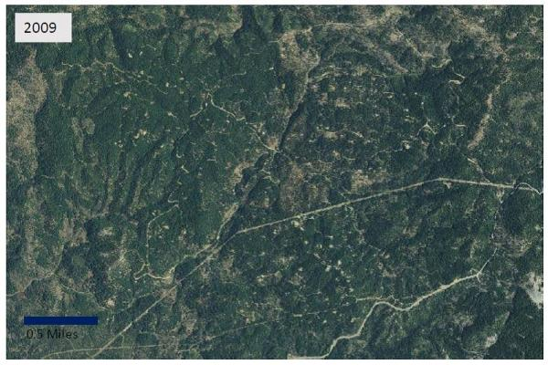 Private land forest conversion for cannabis cultivation in Trinity County, 2009