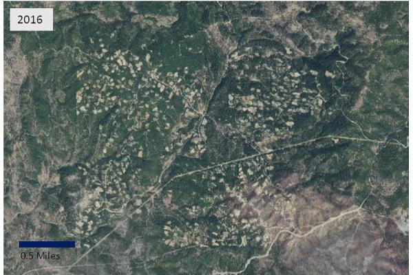 Private land forest conversion for cannabis cultivation in Trinity County, 2016