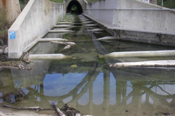 Arroyo Hondo Creek, Highway 101 culvert successfully modified for fish passage